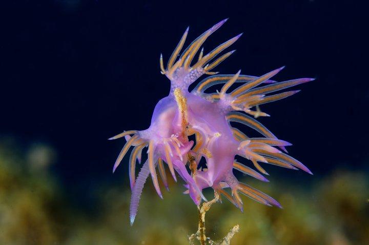 Nudibrance 5