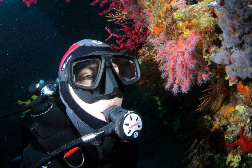 La plongée sous-marine avec des professionnels