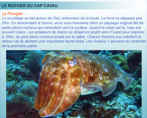 Cap cavau, ile du Frioul, plongée en Provence