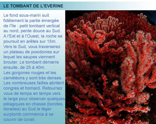 Everine ou Elevine, plongée cote bleue, Provence