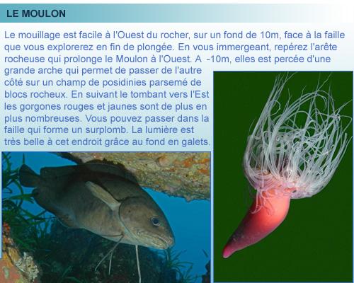 Plongée sur la Presque ile du Moulon, belle plongée de la cote bleue en provence