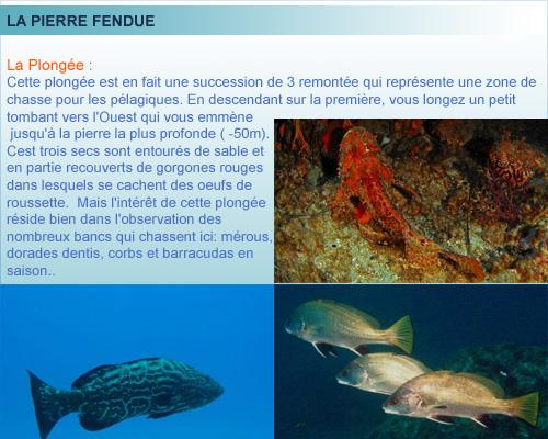 La Pierre Fendue, belle plongée, rade de Marseille, Provence