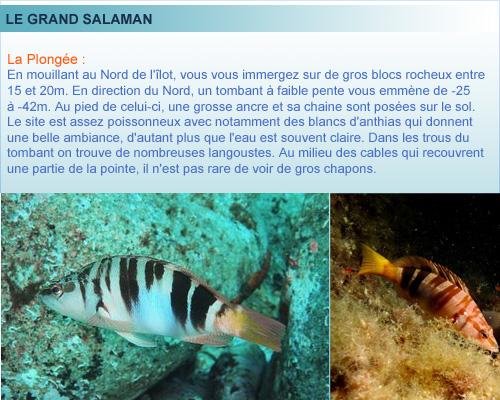 Le Grand Salaman, ile du Frioul, plongée en Provence