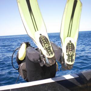 bascule arrière en plongée