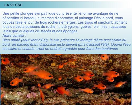 Vesse, belle plongée de la cote bleue en provence